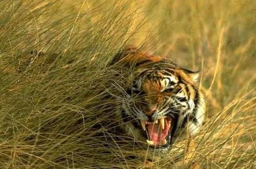 Parque Nacional de Sundarbans, en el sur de Calcuta